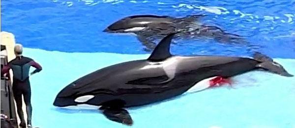 Fotos da baleia orca 12