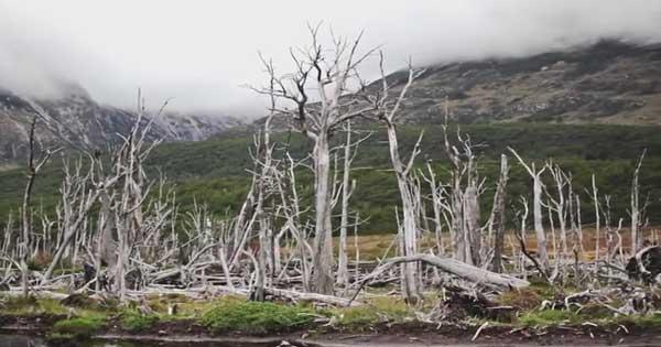 Los castores la plaga de tierra de fuego for Castor habitat
